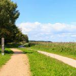 Landstraße mit Fußweg am Waldrand.