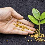 Junge Pflanze Samen