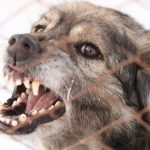Gesetz über das Halten von Hunden
