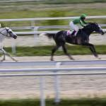 Bei Qualitätsmanagement von Anfang an auf das richtige Pferd setzen