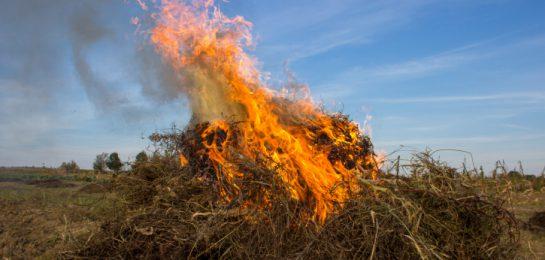 brennender Pflanzenabfall