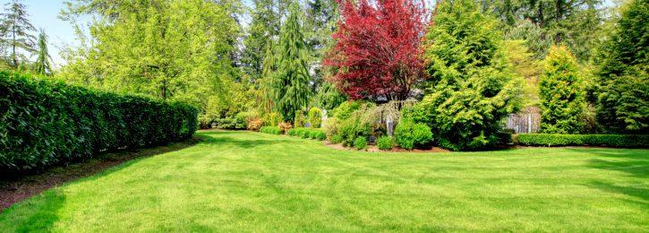 Grundstück mit Rasen