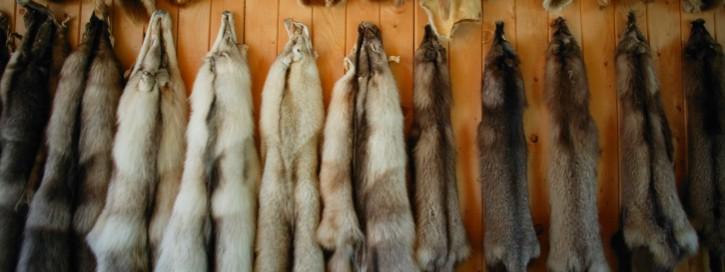 Animal furs