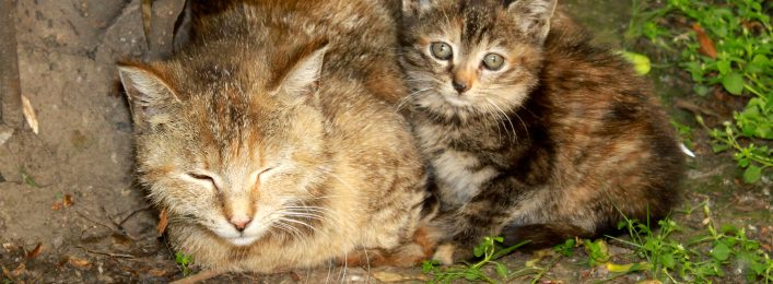 Hessen Kastration freilebende Katzen