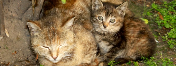 Feral Cats Mommy and Baby Kitty