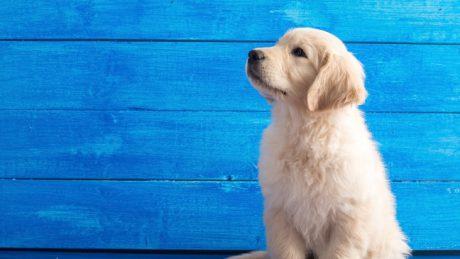 Erhöhter Hundesteuersatz für bestimmte Hunderassen beanstandet