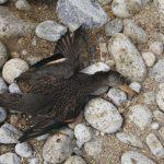 tote Wildvögel