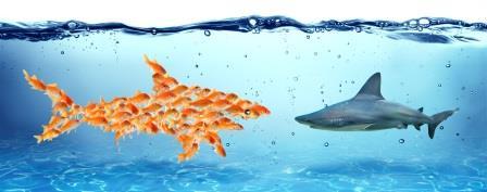 Kleine Fische wehren sich gegen einen Hai