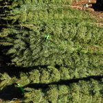 Weihnachtsbaumverkauf in Grünanlage zu Recht abgelehnt