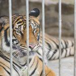 Berlin: Verordnung über das Halten gefährlicher Tiere wildlebender Art