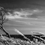 Unbeugsamer Baum