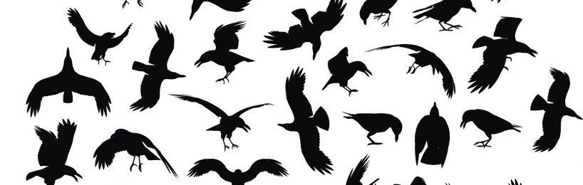 Krähen und Raben