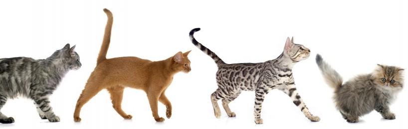 Behandlungskosten Fundkatzen