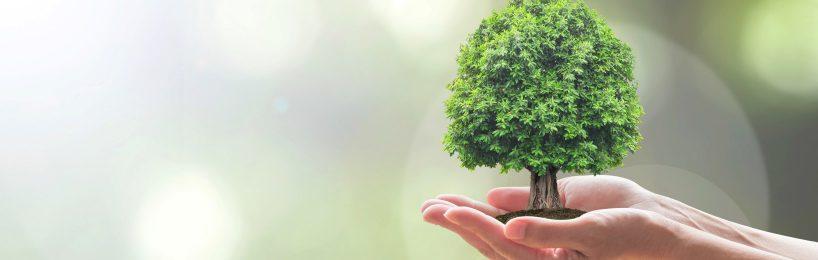 Umweltfreundliche öffentliche Beschaffung