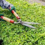 überhängende Pflanzen Rückschnitt Kosten