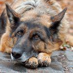 Kostenersatz Hund Tierheim