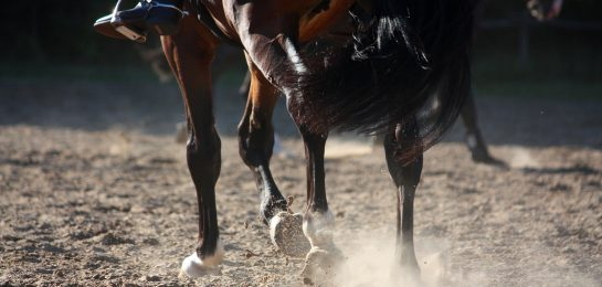 Sandreitplatz Pferdehaltung