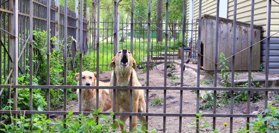 Hundegebell unterbinden