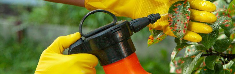 Pflanzenschutzmittel im einsatz bei Birnenbaum