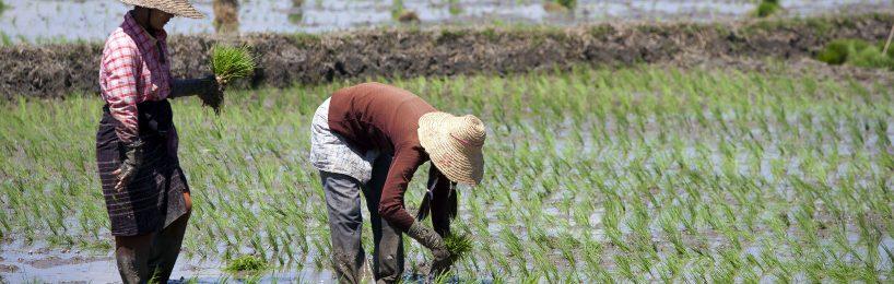 Schutzzölle auf Stahl und Reis: Die EU-Kommission hat Schutzmaßnahmen für die europäischen Hersteller und Verbraucher beschlossen.