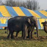 Wildtierverbot Zirkus