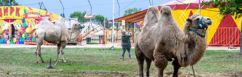 Wildtiere Zirkus Widmungszweck