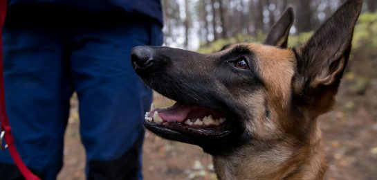 Ausbildung von Hunden