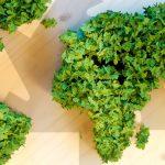 """Zum Status quo der Nachhaltigkeit im Einkauf hat der BME jetzt das Fachmagazin mit dem Titel """"BIP-Best in Procurement"""" herausgebracht."""