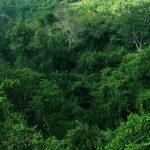 Appell von Agrarunternehmen, Umweltschutzverbänden und Wissenschaftlern an Brasilien, gegen die Waldbrände im Amazonas vorzugehn