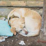 Kosten Unterbringung ausgesetzter Hund