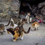 streunende Katzen