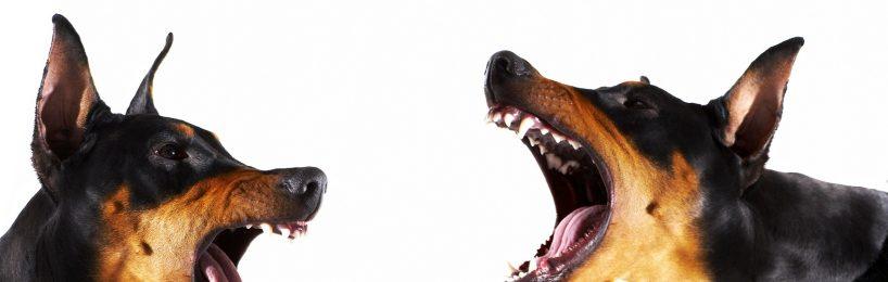 gesundheitsschädliches Hundegebell