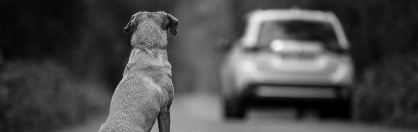 Unterbringung verletzter Hund Aufwendungsersatz