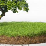 Querschnitt durch einen Boden mit Vegetation darauf.