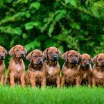 Hundezüchterin gewerblich tätig