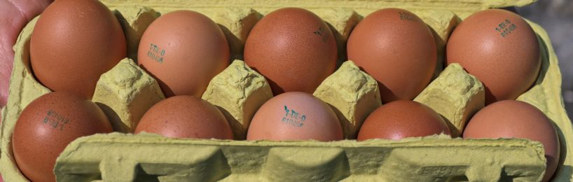 wiederverwendbare Eierkartons