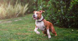 Gefährlicher Hund: Sicherstellung rechtmäßig?
